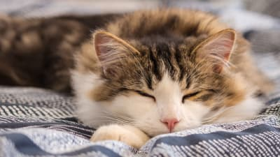 My cat sleeps constantly, when should I worry? | Memphis Emergency Vet