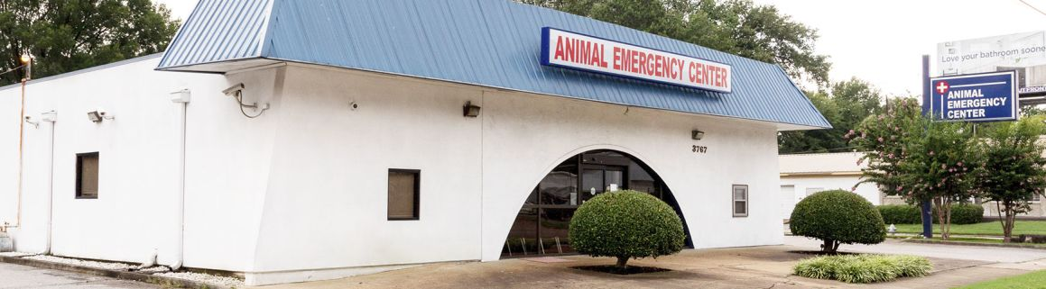 About | Animal Emergency Hospital | Memphis